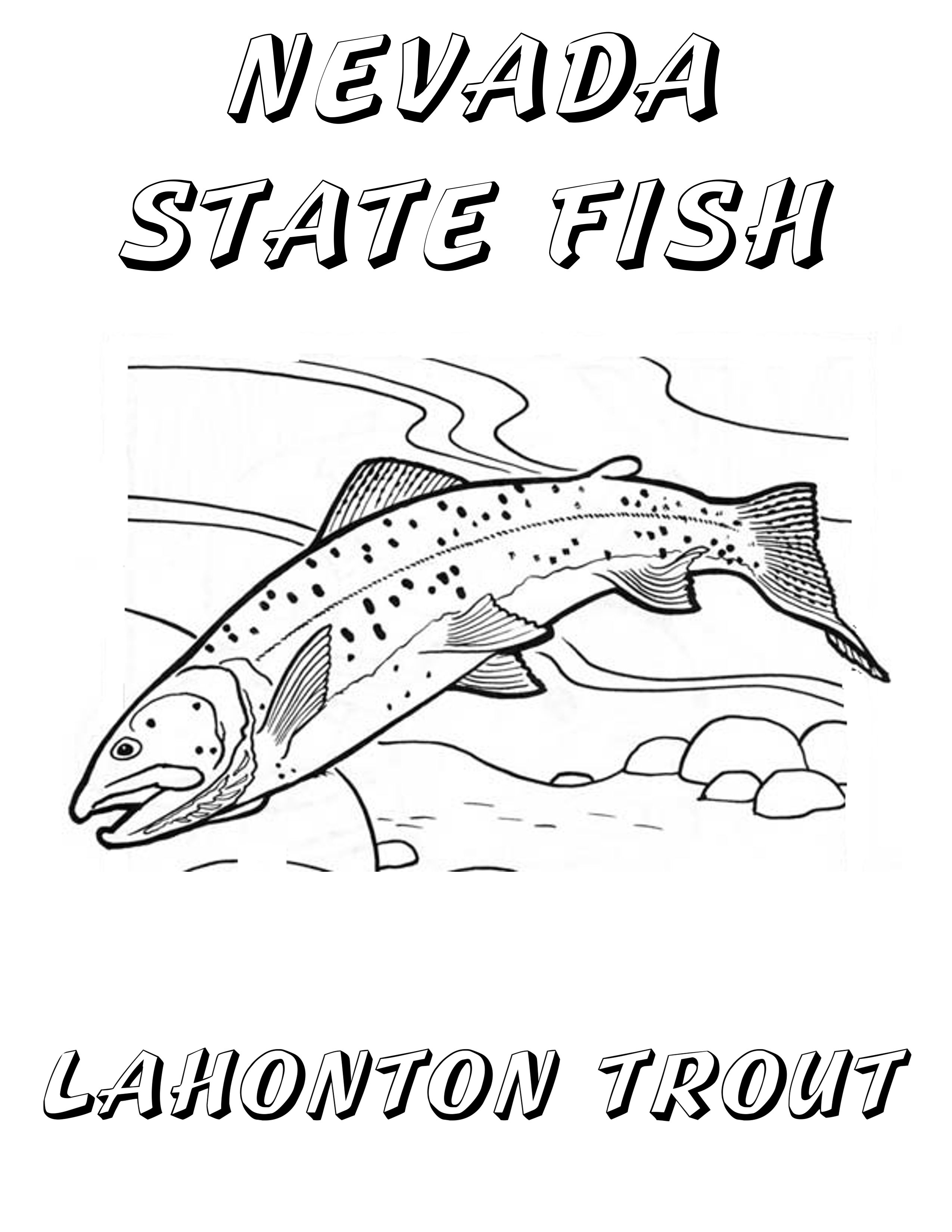 Cutthroat Trout Coloring Page Trout Art Fish Drawings