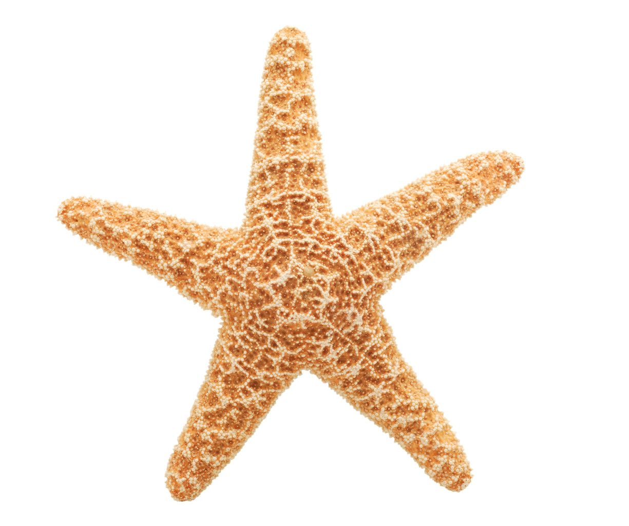 Starfish poem card - Starfish A Special Meaning