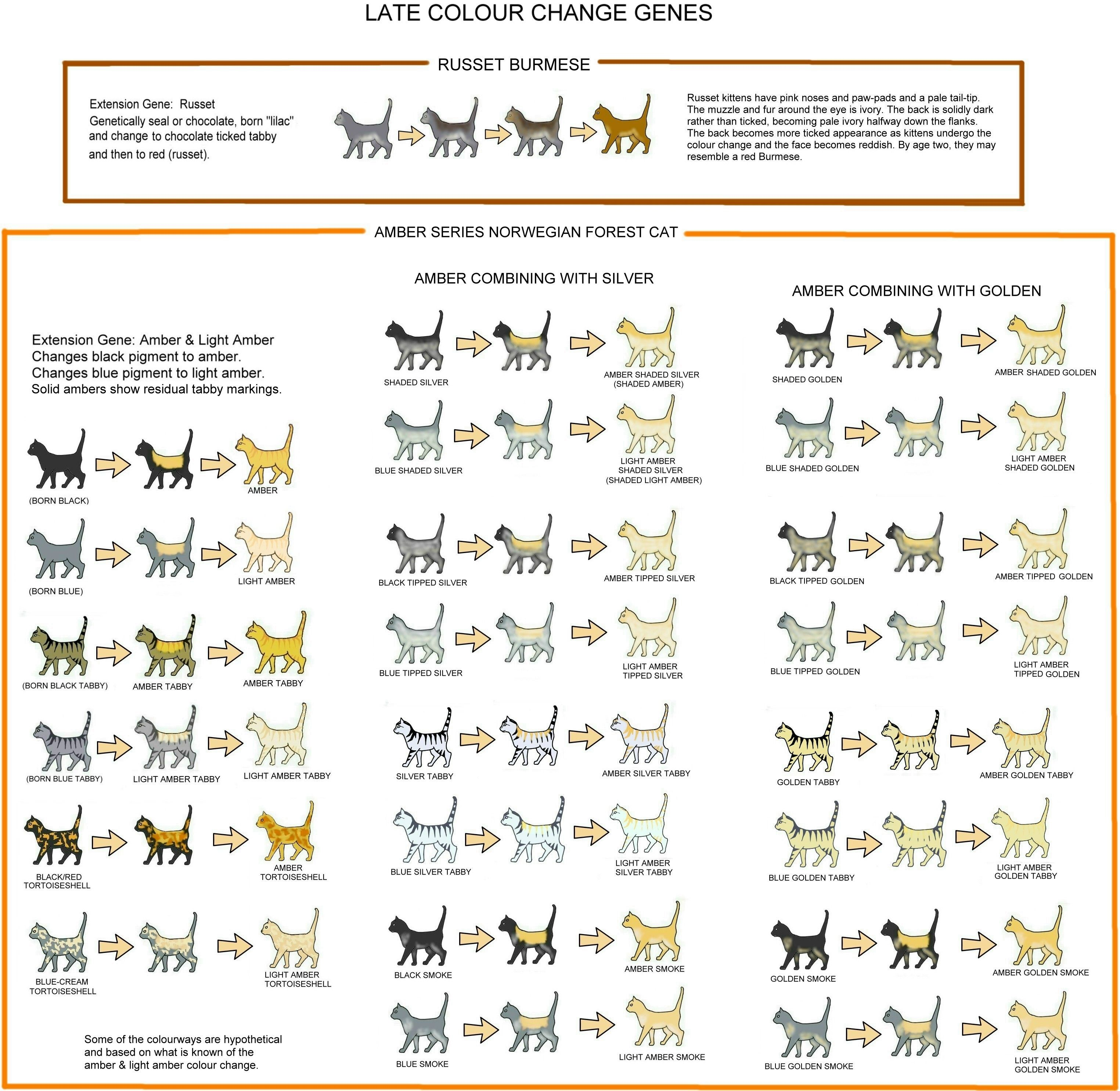 Cat COLOUR AND PATTERN CHARTS and article, very detailed and ...