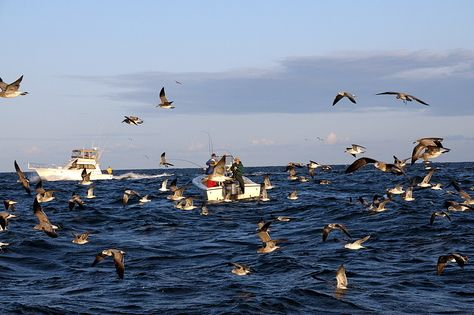 Flyfishing is good ? (85Phots) : 大海原とフライロッド