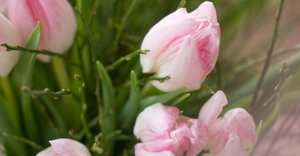 KW 51 kurzstielig: TENDER TEMPTATION | 20 Tulpen und 2 Bund Heidelbeere für Ihre Tischvase | BLOOMY DAYS