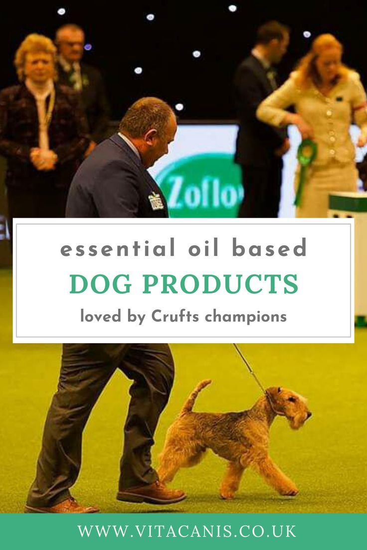 Wondering What Natural Must Have Dog Products Are Used By Dog Show
