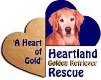 Pin On Golden Retriever Rescue