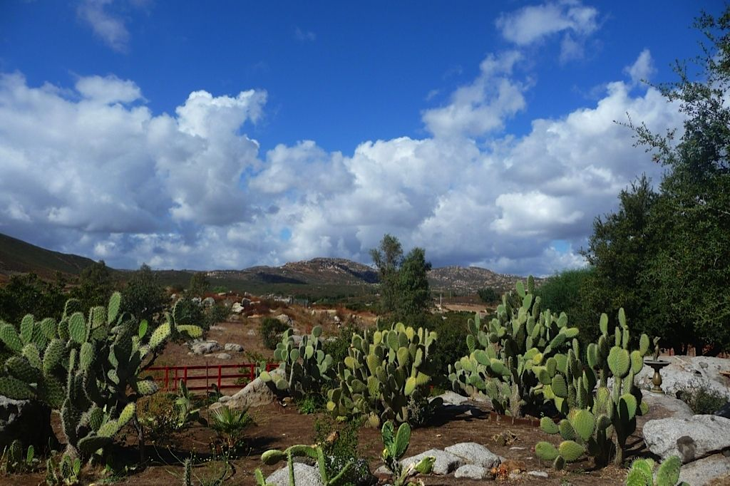 Backyard view of parents ranch in Tecate. Backyard views