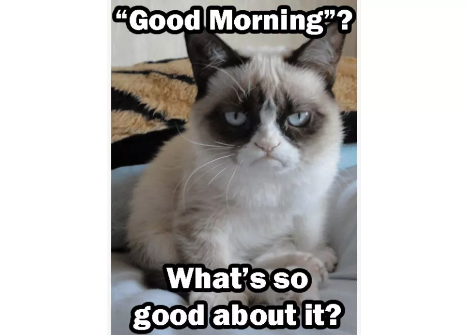 Hope You Re Ready For Some Good Morning Memes Good Morning Funny Pictures Grumpy Cat Good Morning Funny