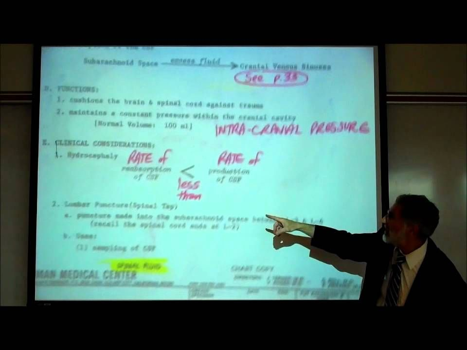 The Production & Circulation of Cerebrospinal Fluid CSF by Professor ...