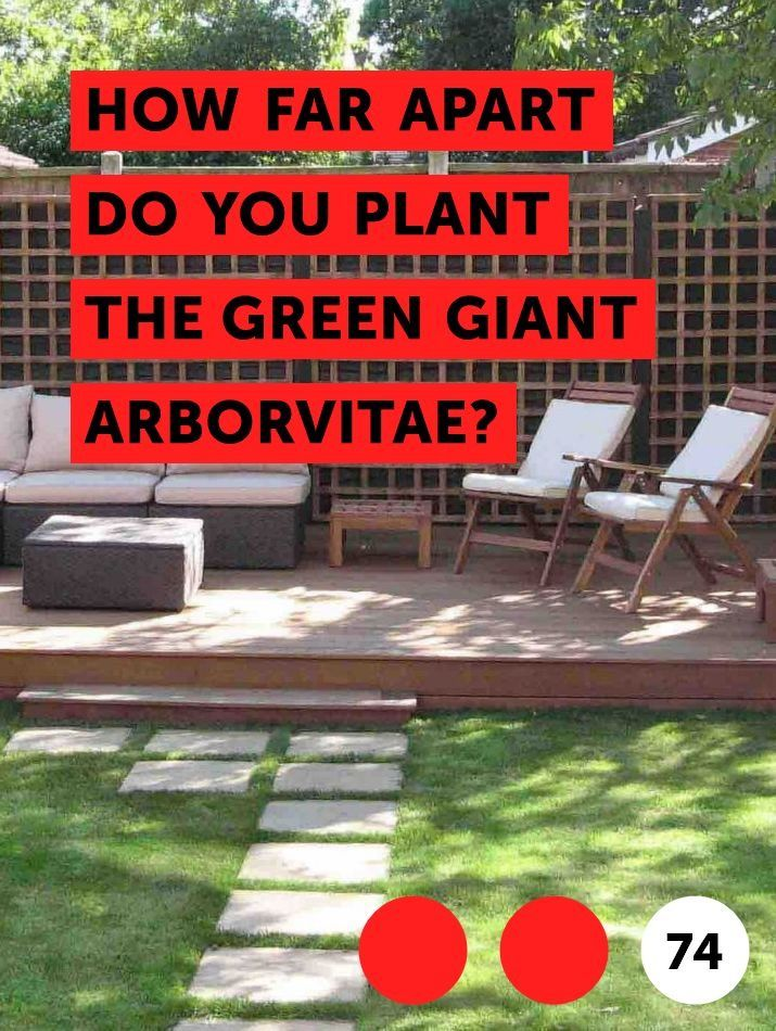 How Far Apart Do You Plant The Green Giant Arborvitae Green Giant Arborvitae Fruit Trees