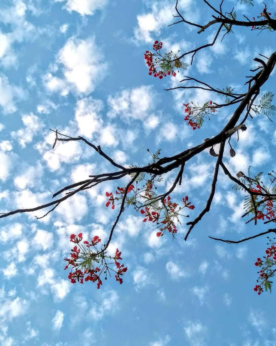 Blue Skies For Days Red Blue Nature Photography