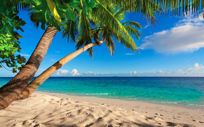 Scarica Sfondi Seychelles Spiaggia Palme Mare Isole Tropicali