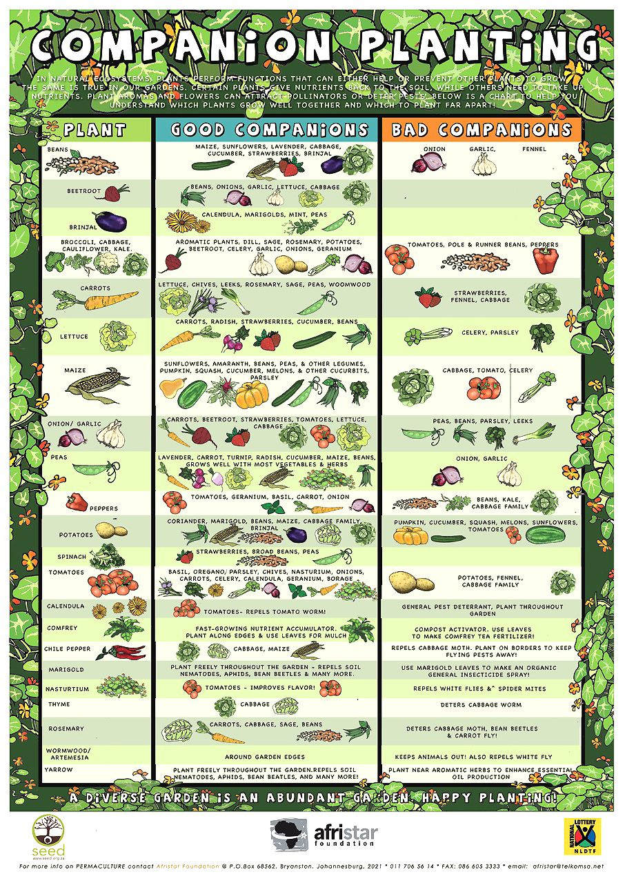 Companion Planting Infograhic For Organic Gardening  Great