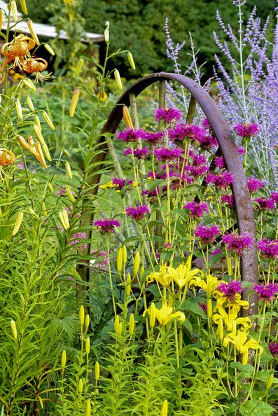 Plant colour combinations that I like and use in the garden. Acid yellows and greens with purples and silvers. Nice use of the 'wheel' to draw the eye to a focal point.