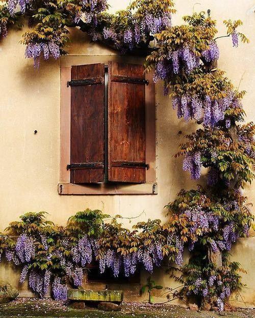 Finestra glicine window finestre pinterest ventanas jardines e balcones - Finestra a bovindo ...