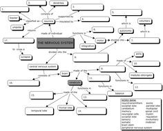 Nervous System Concept Map | ETC | Pinterest | Nervous System