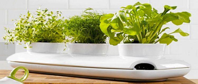 jardiniere-design-pour-plante-aromatique-dans-cuisine-Fancy
