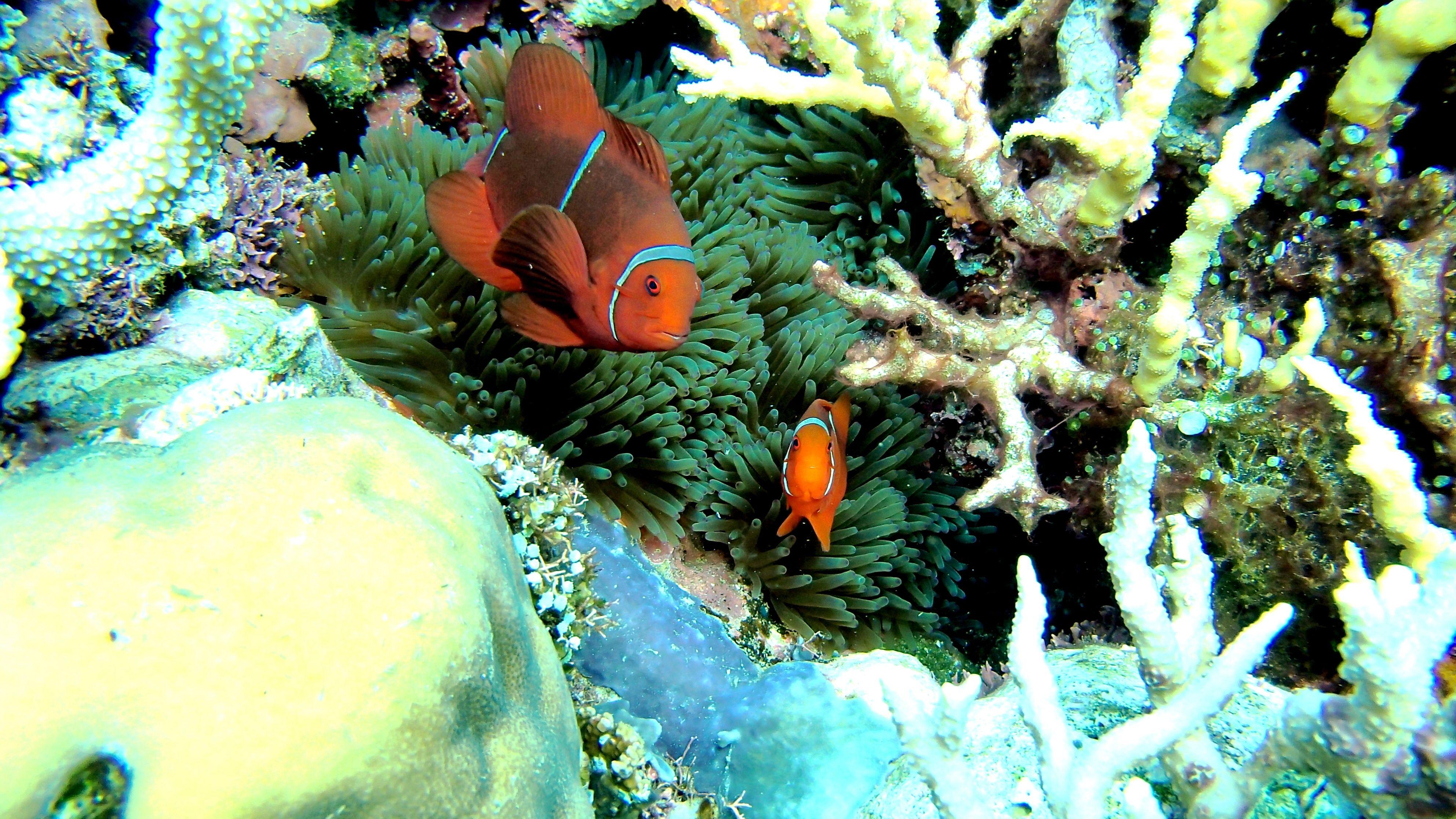 Tinalapu Island, Central Sulawesi Indonesia | Indonesia