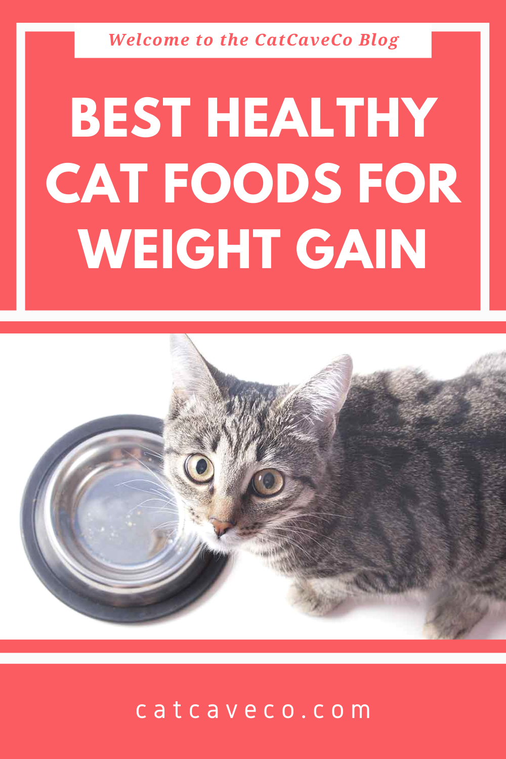 Pin On Cat Food Ideas
