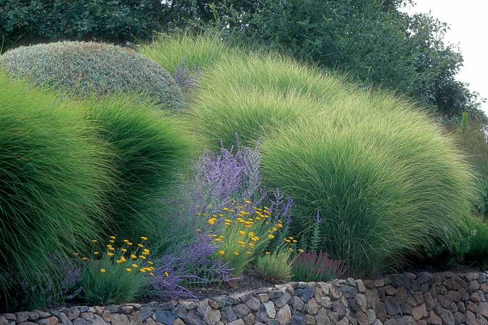 Designing With Grasses Finegardening Perennial Grasses Shade Perennials Full Sun Perennials