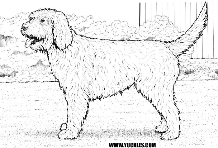 Perfect Labradoodle Coloring Page