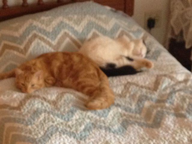 Valentina e Tigrinho se apossaram da cama do quarto de visitas rs <3