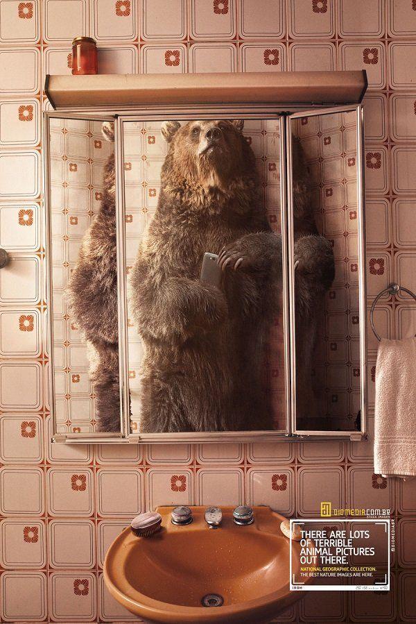 È la fine: anche gli animali si fanno i selfie allo specchio. La brillante idea di National Geographic.  #animals #funny