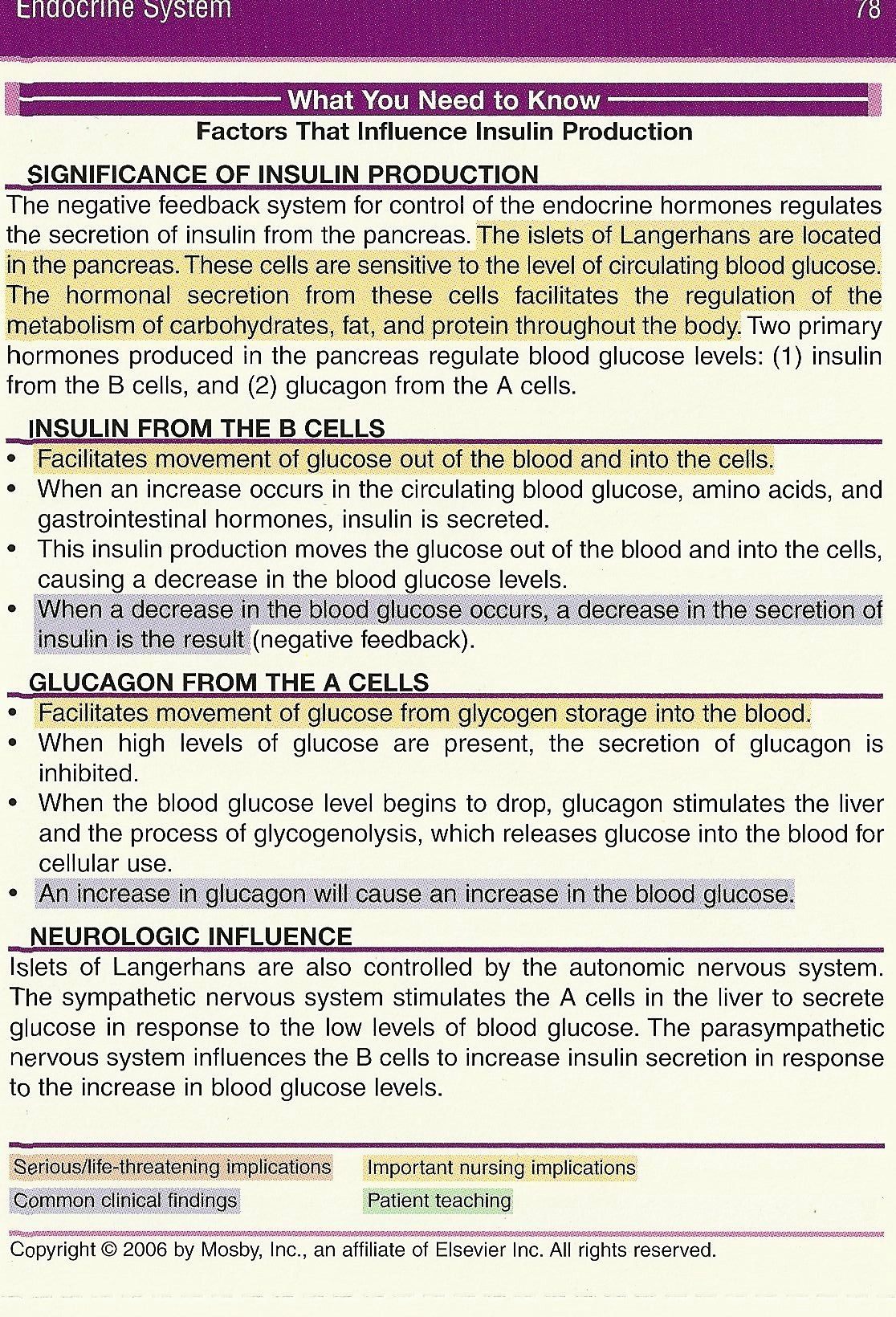 What You Need To Know Insulin Production