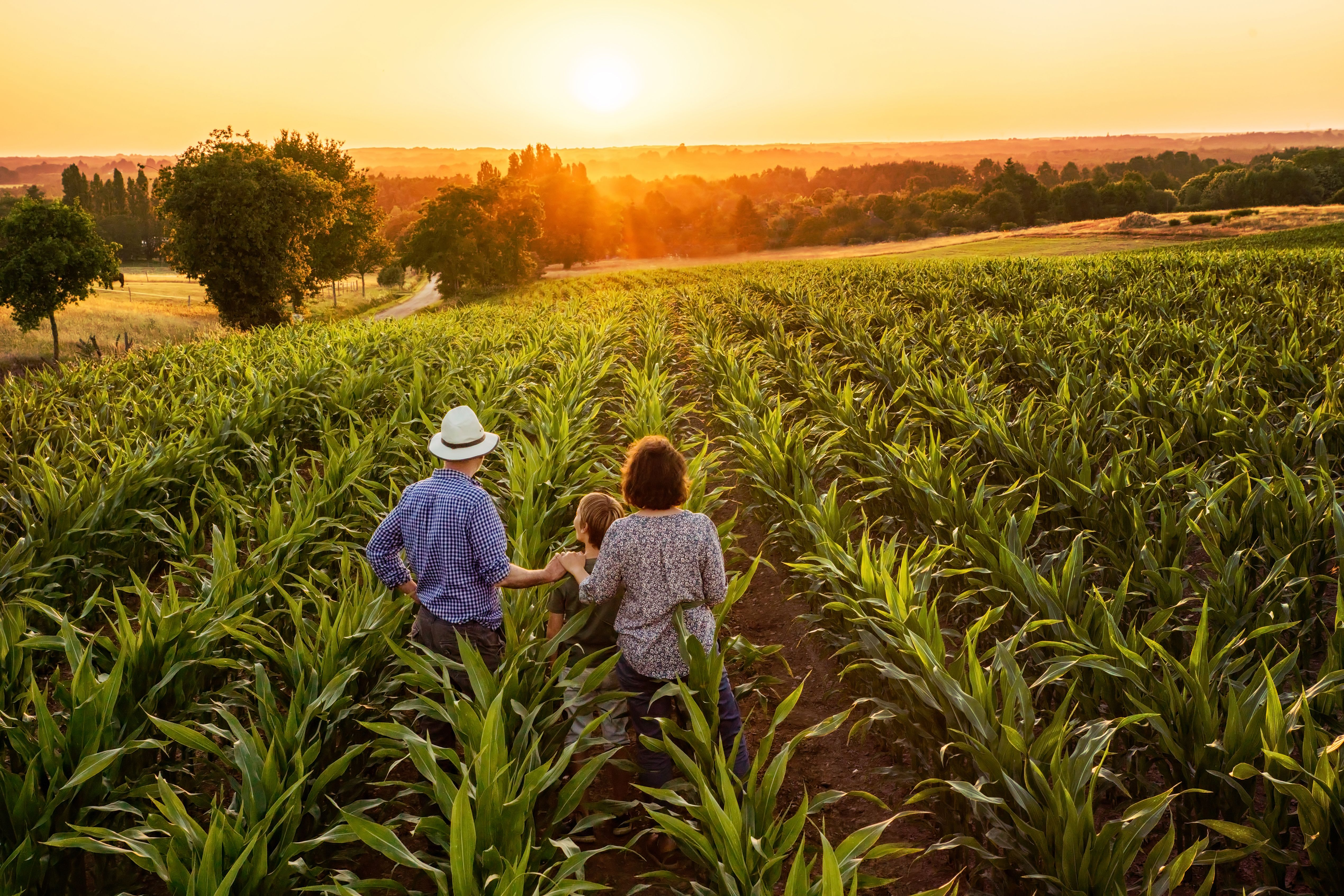 Under the USDA's Definition, 90 Percent of Iowa's Farms