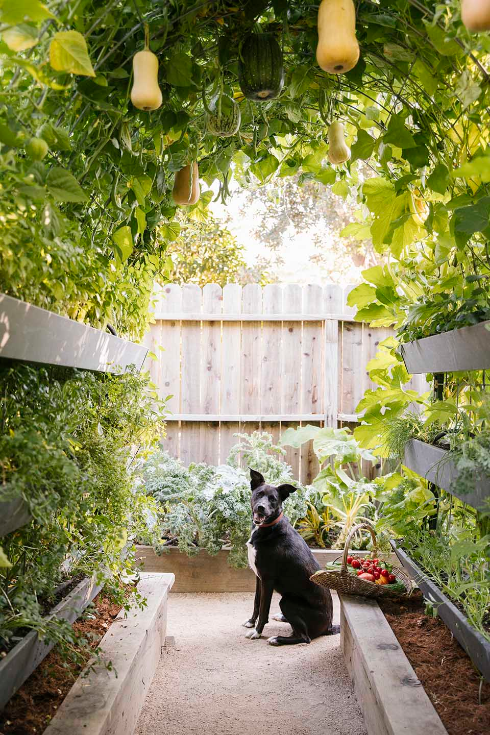 Whether your yard is the size of a postage stamp or you're just looking for ways to use your vertical space, trellising is a beautiful way to grow veggies. Here's how to grow vegetables in a vertical garden.