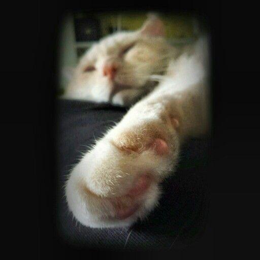Cat's paw.