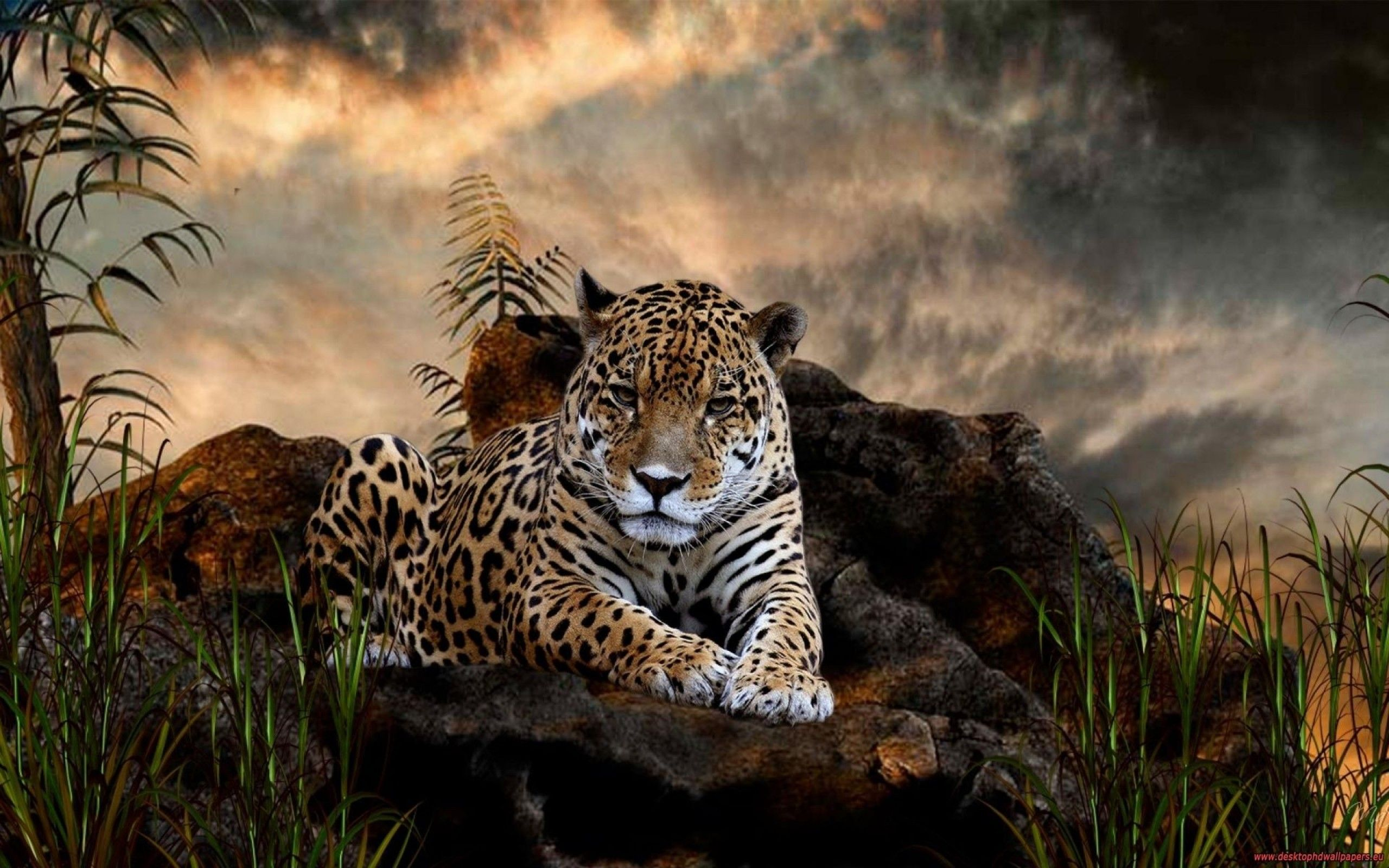 amazing tiger animal wallpaper | wallpaper | pinterest | animals