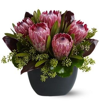 Pinterest ti leaves seeded eucalyptus galas leaves pink mink protea mightylinksfo