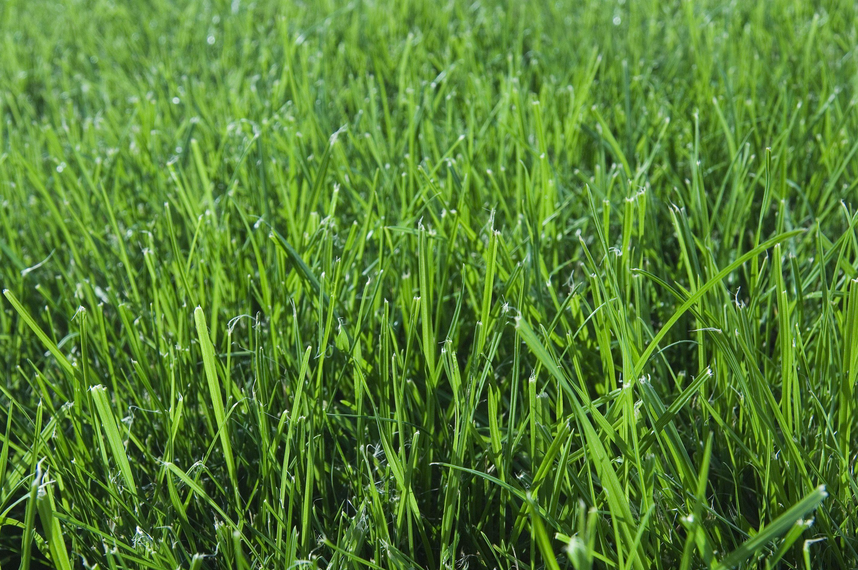 Broadleaf Weed Control In Lawns