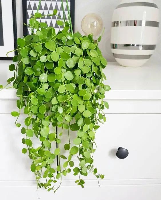 The Best Indoor Hanging Plants