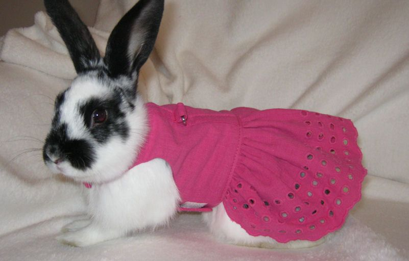 Pet rabbit harness dress in pink cotton. $20.00, via Etsy.