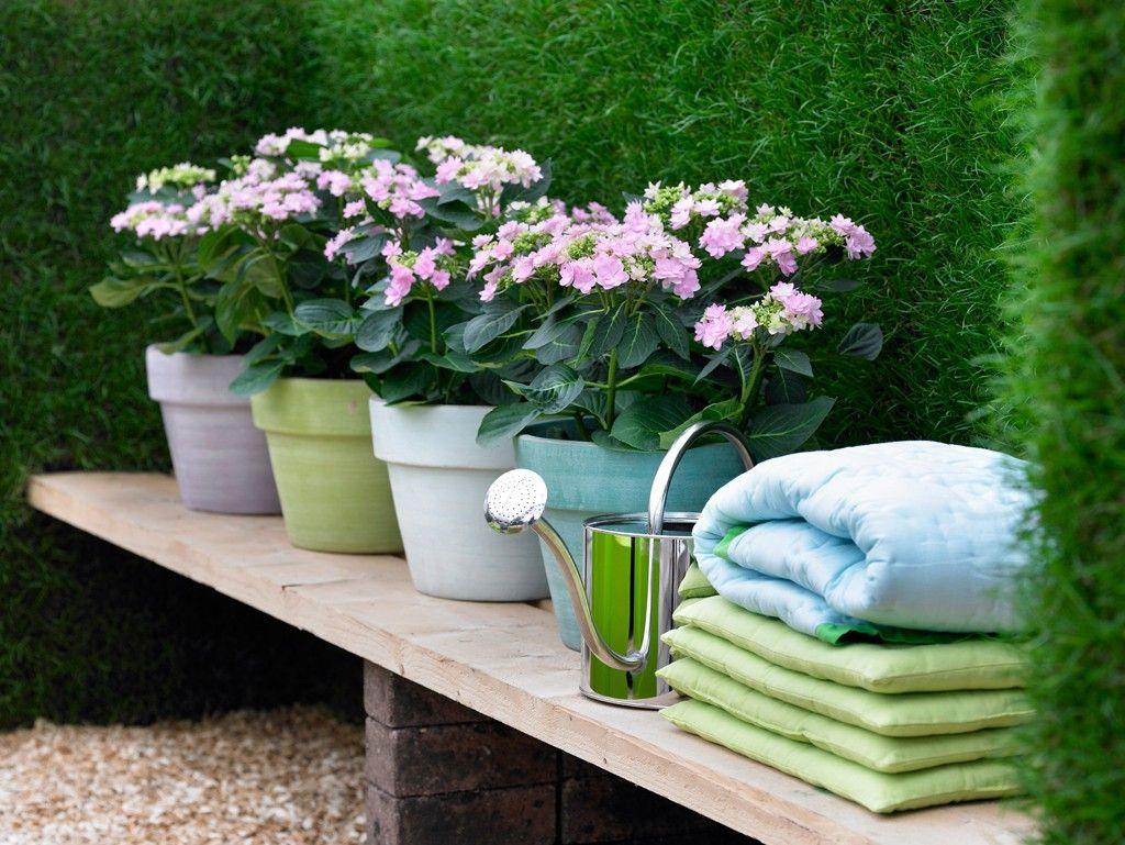 Bildergebnis für pflanzkübel für hortensien