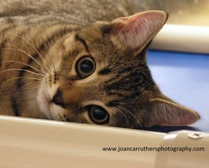 Adopt 388 Mr Beasley On Petfinder Help Homeless Pets Cat Adoption Homeless Pets
