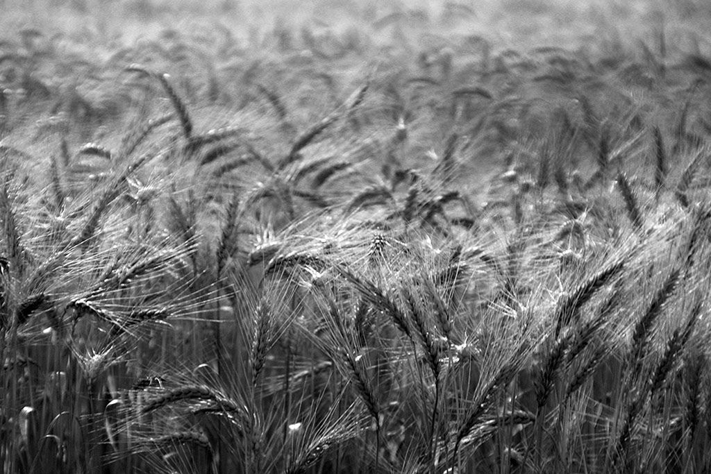 Do trigo o pão... Da palha os chapéus, as sporta, os cestos... GRANDES MULHERES....