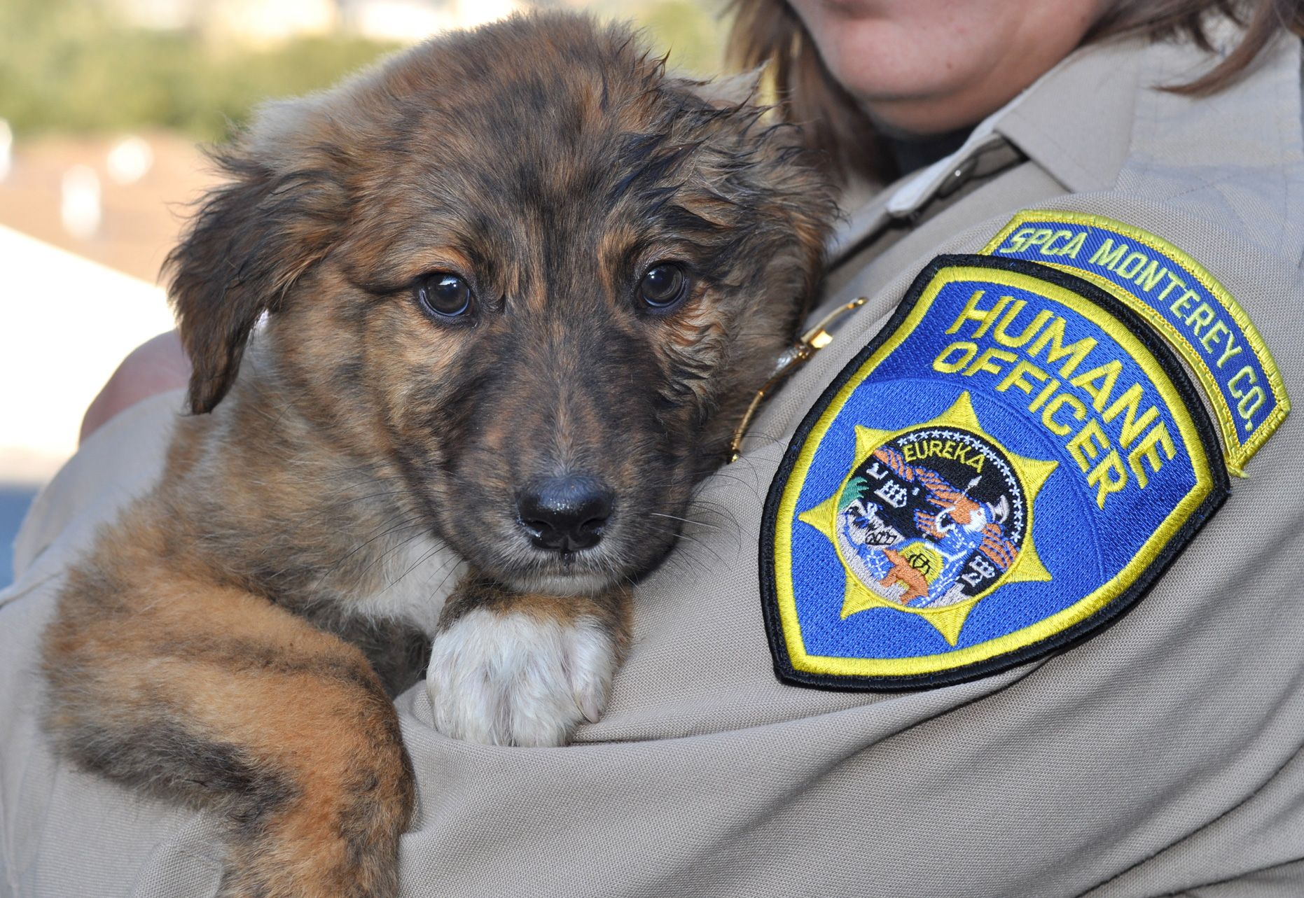 This adorable puppy was abandoned at a plastics recycling