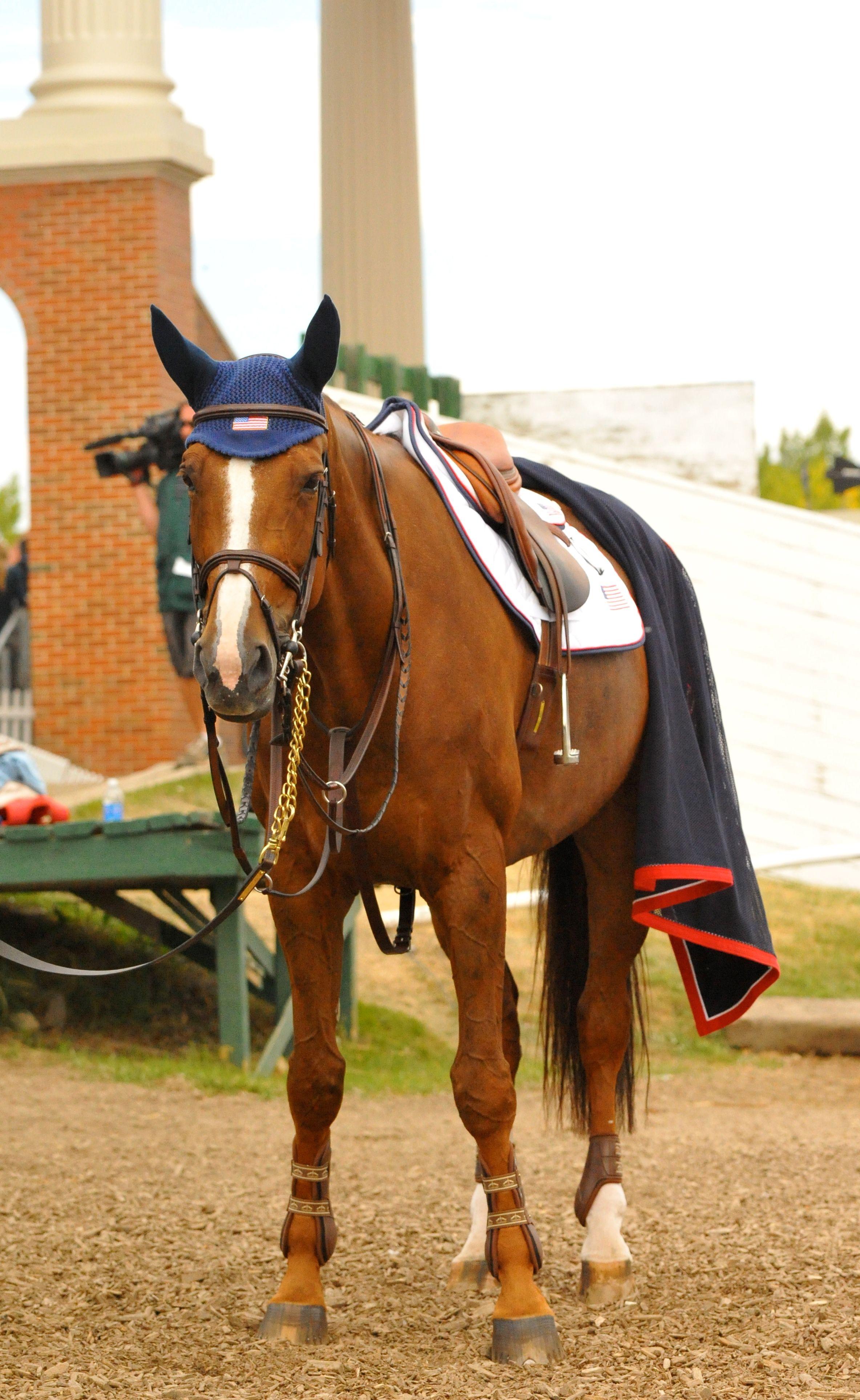 Im ready horses horse photography horse love