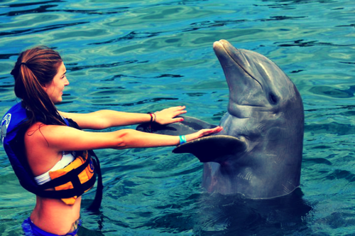 play with dolphins (:
