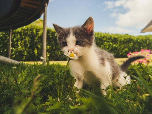 Over A Thousand Adorable Cat Pictures Pexels Free Stock Photos Cats Smelling Kittens Cutest Grey Kitten