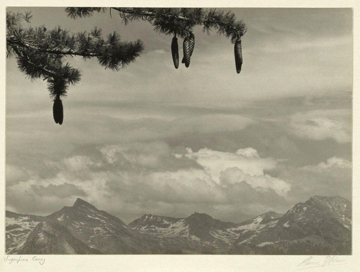 Ansel Adams (American, 1902 – 1984) Sugar Pine Cones Negative 1925 ...