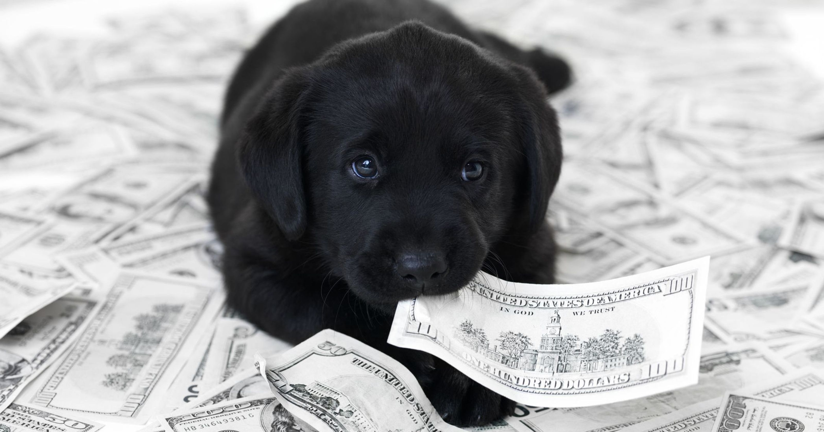 Even With Pet Insurance Owning A Dog Or Cat Comes With Medical Bills Hidden Costs Dog Owners Dogs Dog Care
