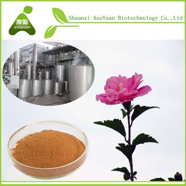 Specifications Product Name Hibiscus Extract Specification51 101