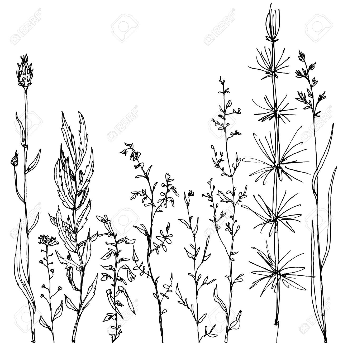 Flower Plant Line Drawing : Wild flower floral composition with ink drawing herbs and