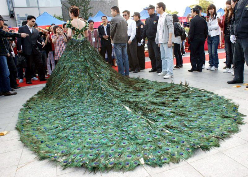Wedding Dress Made Of Peacock Feathers At A Cost Of 1 5 Million Dollars Expensive Wedding Dress Weird Wedding Dress Wedding Dress With Feathers