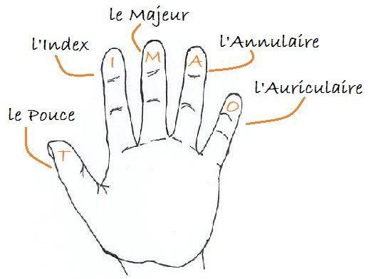 Vocabulaire: Les doigts de la main. (Les cinq doigts du