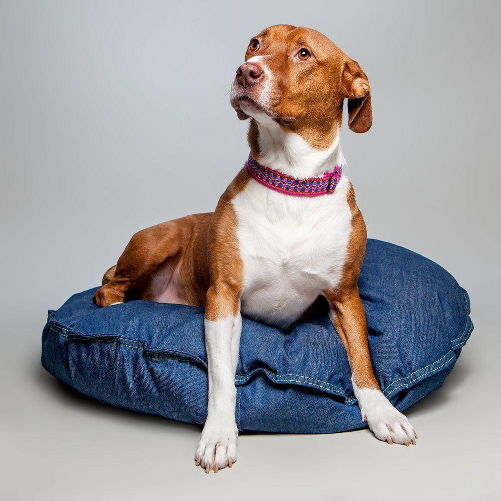 Lookbook The Sweetest Sugar Mutts Pet Collars Support Animal