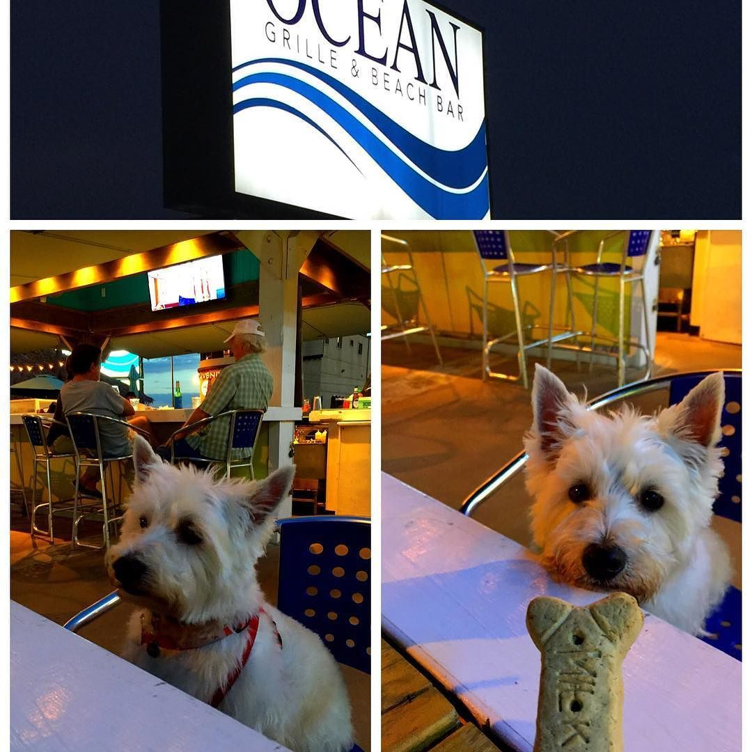 Now Dinner At A Great Pet Friendly Restaurant Ocean Grille