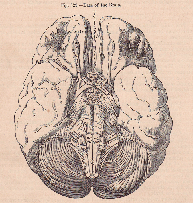 I Chose This Image Because It Is A Representation Of The Human Brain