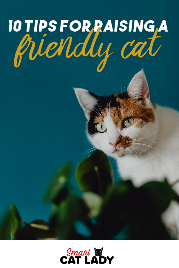 10 Tips For Raising A Friendly Cat in 2020 (With images